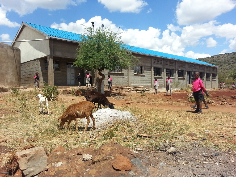 Because of the drought, we allow local goats to eat any grass at the school.
